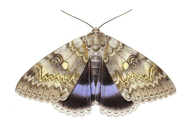 Moth isolated on the white.
