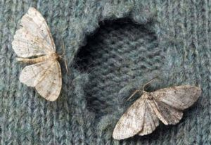 Moths In Closet With Clothes
