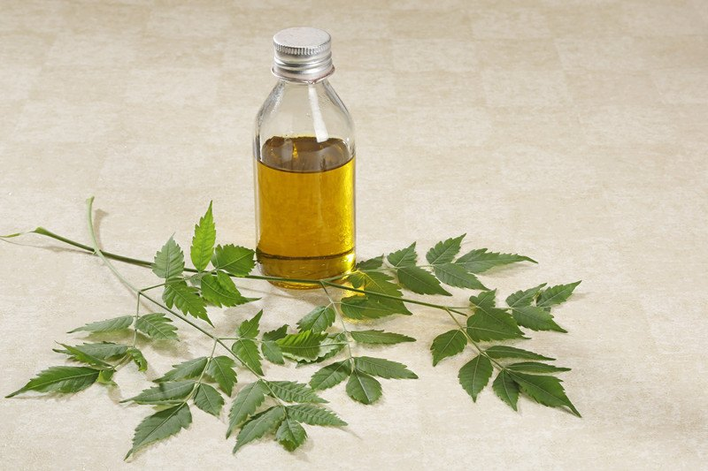 Neem treel eaves, seeds and neem oil