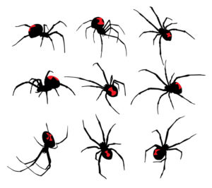 Black Widow spider set on white background
