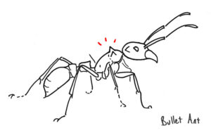 Drawing bullet ant
