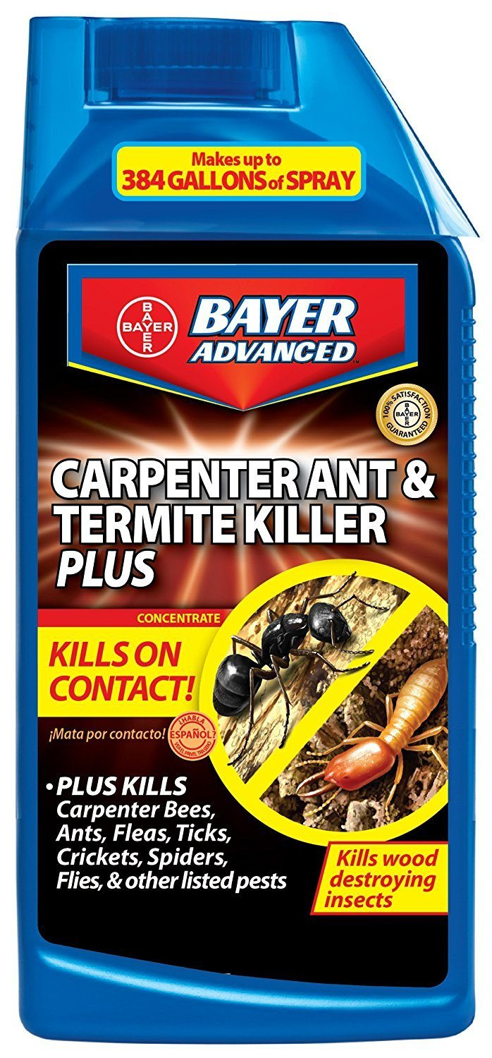Do It Yourself Home Design: Carpenter Ants In House: 5 Most Effective Repellent Help