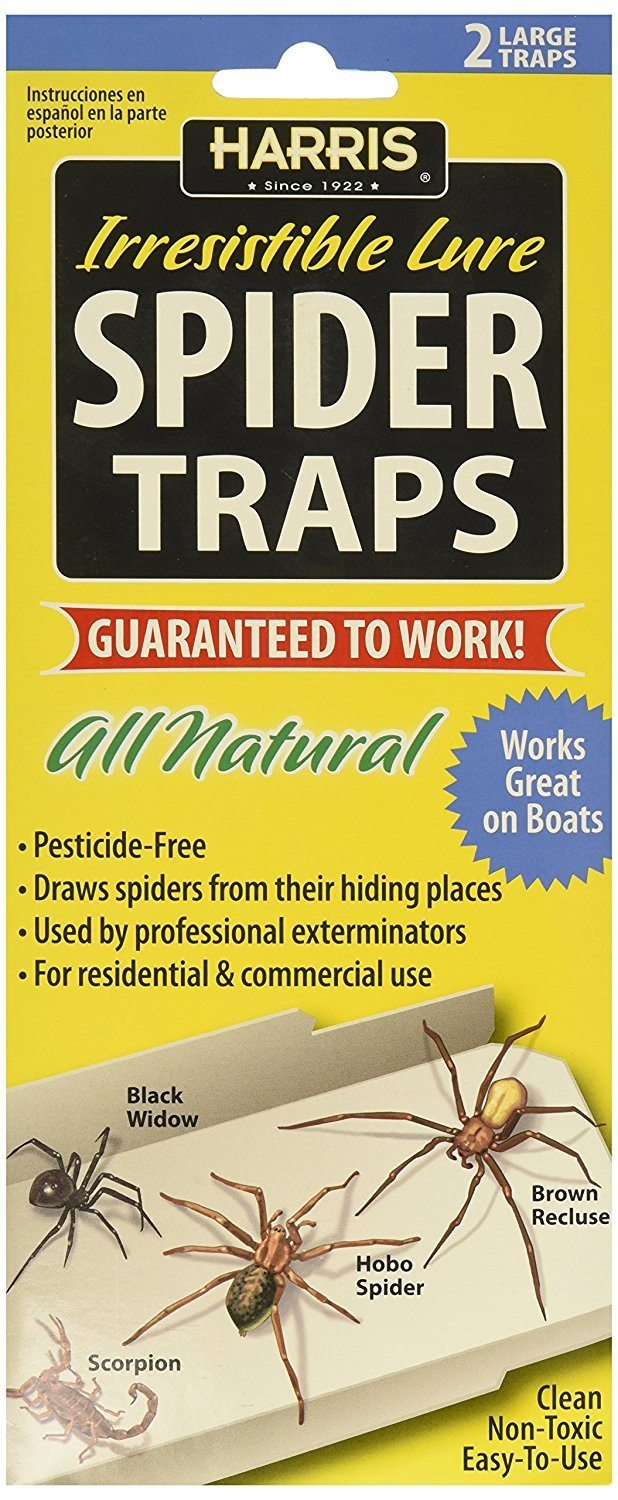 Awesome Natural Spider Glue Traps with Lure