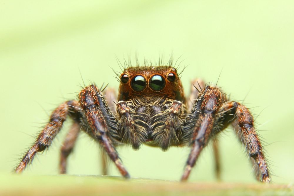Spiders 101 Amazing Facts Common Species Prevention