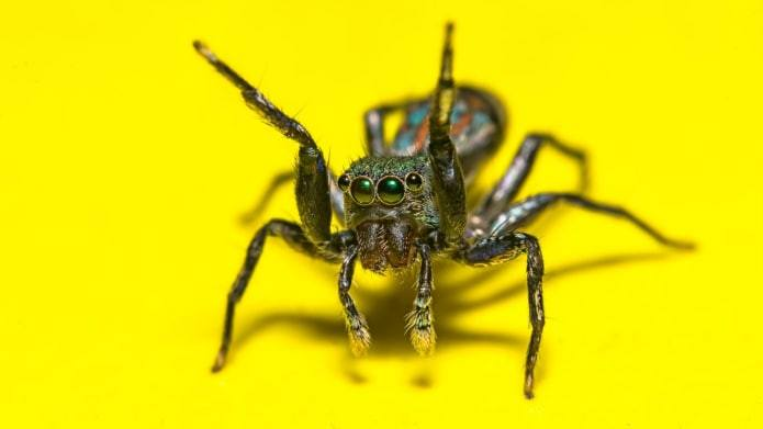 Spider isolated on the yellow.