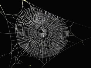Spider web in the dark.