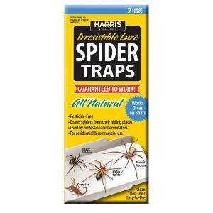 TERRO Spider & Insect Trap on the white.