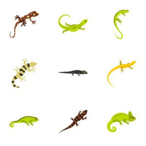 Flat illustration of 9 lizard vector icons.