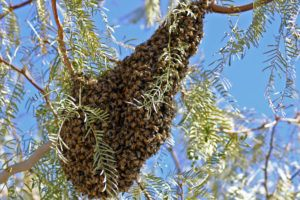 Swarm of killer bees in mid air.