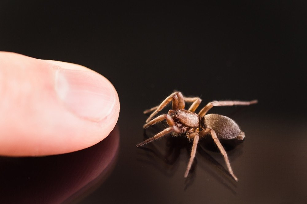 Wolf Spider Facts – Identifying and Controlling These ...