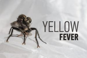 Scary insect and the inscription: Yellow fever.