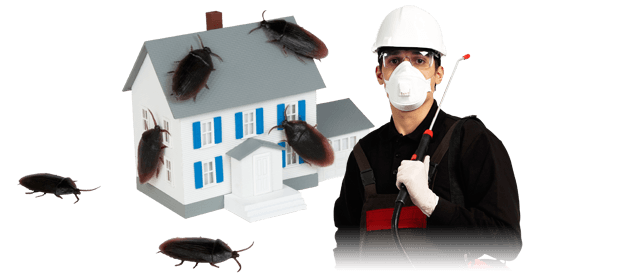 5 best flea bombs 2017 how to use it the right way pestwiki need to hire an exterminator ccuart Images