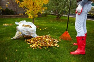 Woman in red boots raking Fall leaves at garden.