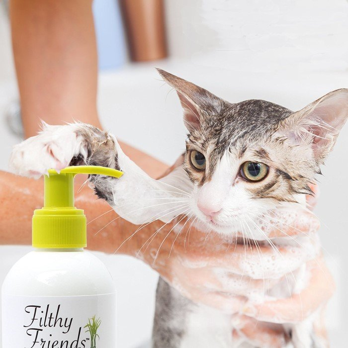 best cats flea shampoo review