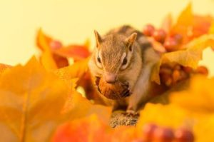 Best 7 Chipmunk Bait & Chipmunk Facts and Bait a Trap (2019 ... Will Chipmunks Eat Wiring on deer eat, penguins eat, cows eat, tigers eat, snakes eat, spiders eat, seals eat, squirrels eat, mice eat, rodents eat,