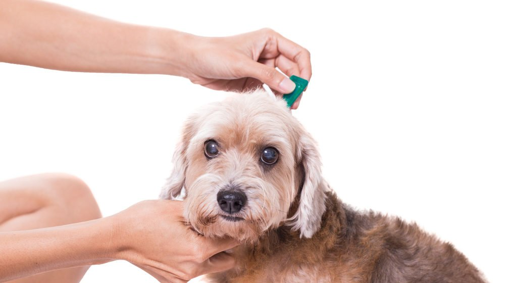 top fleas repellents reviewed