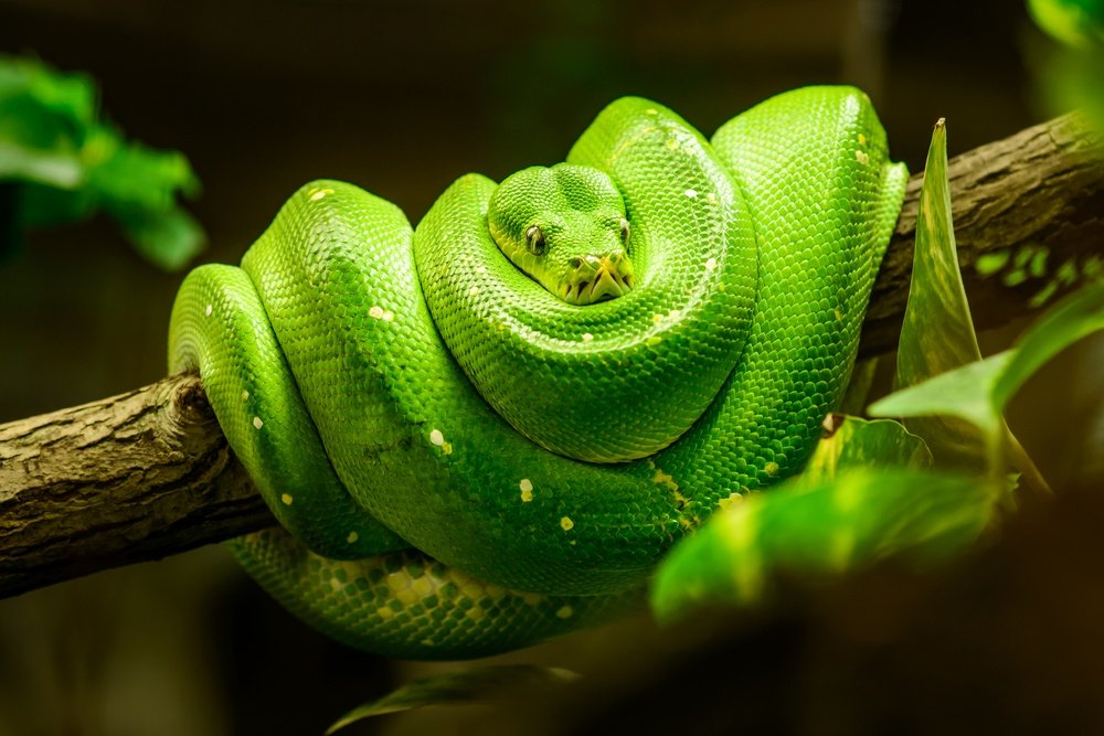 Best DIY Remedies for Snakes