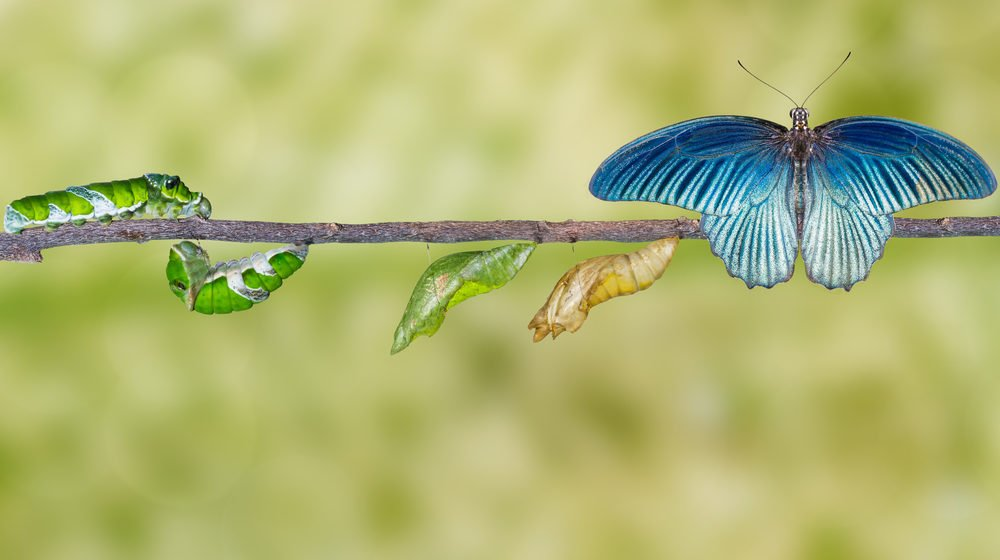 Caterpillars Become Butterflies