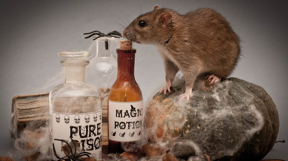Rat Poisons
