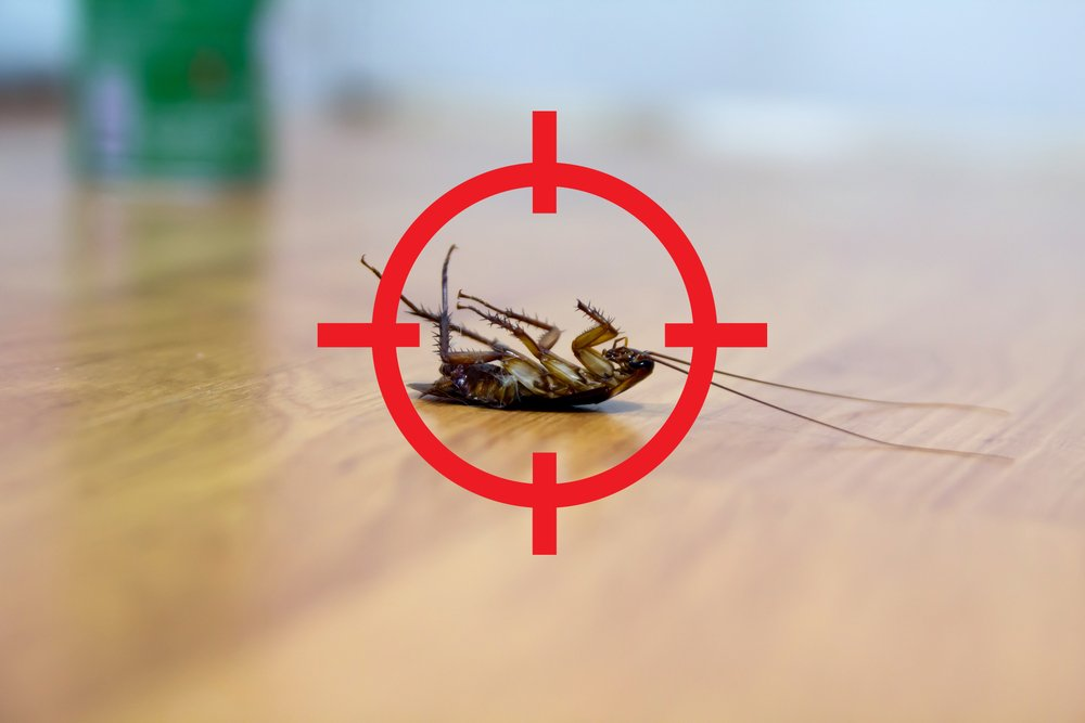 cockroaches control without exterminator