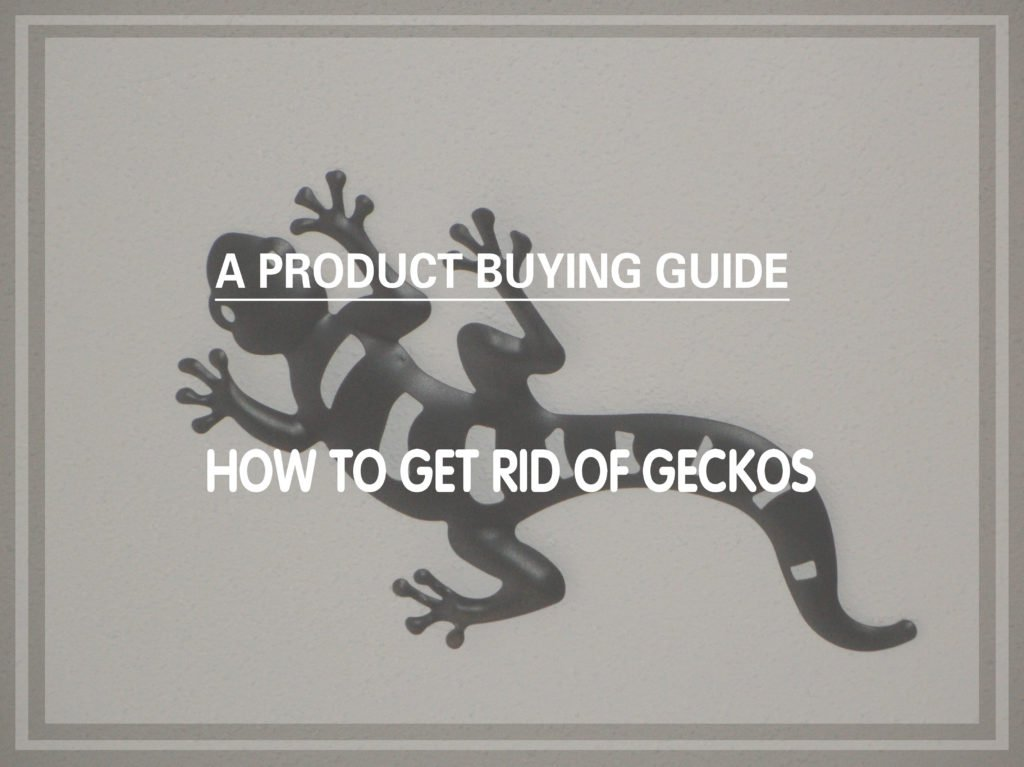 6 Best Gecko Repellents to Buy In 2019 - Pest Wiki