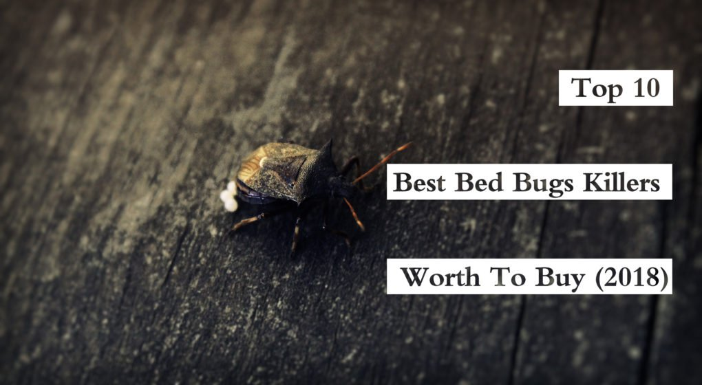 keep bugs them of bug kit sc get tempo pest diy by out and control teaserbox shop rid ultra bed