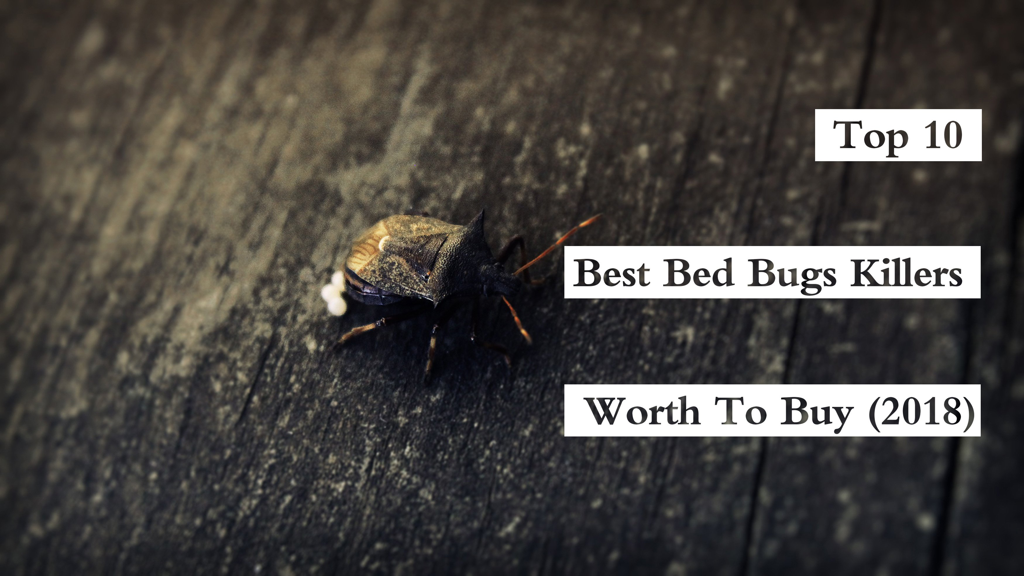 bed bug killers