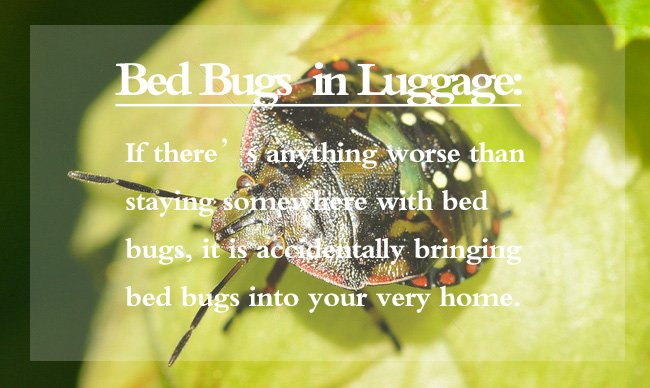 Bed Bugs in Luggage