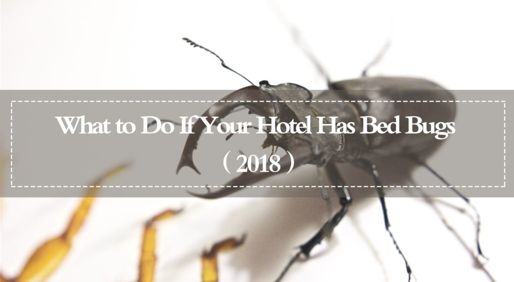 Travel Tips What To Do If Your Hotel Has Bed Bugs Bed Bugs Hotel