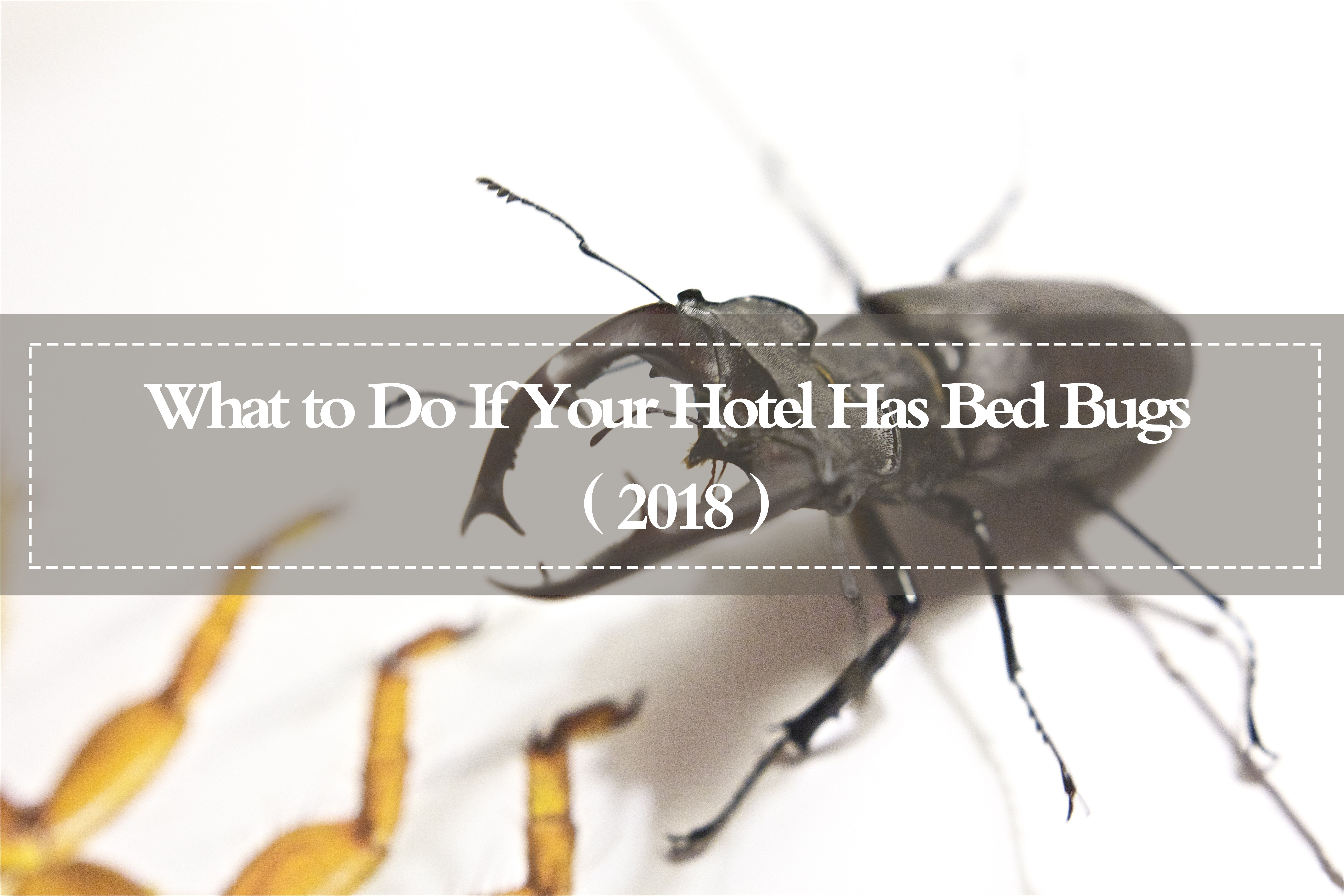 bed bugs hotel