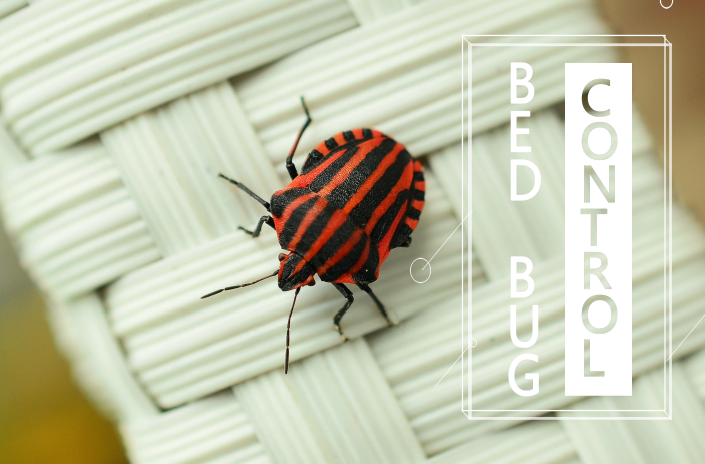 Control Bed Bugs Naturally