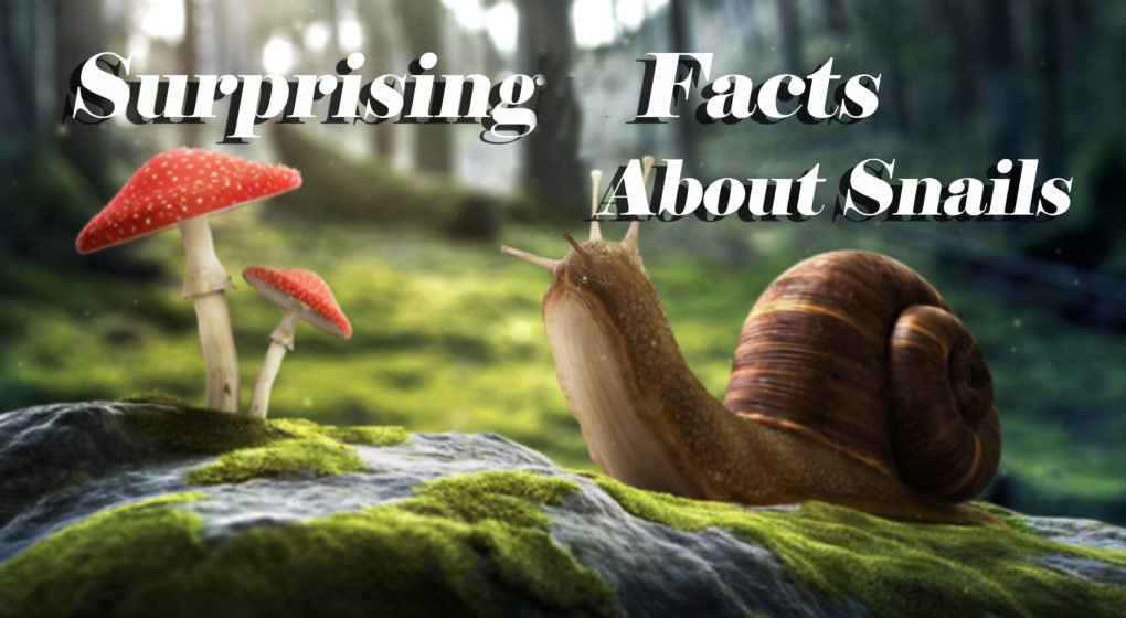 Snail Facts