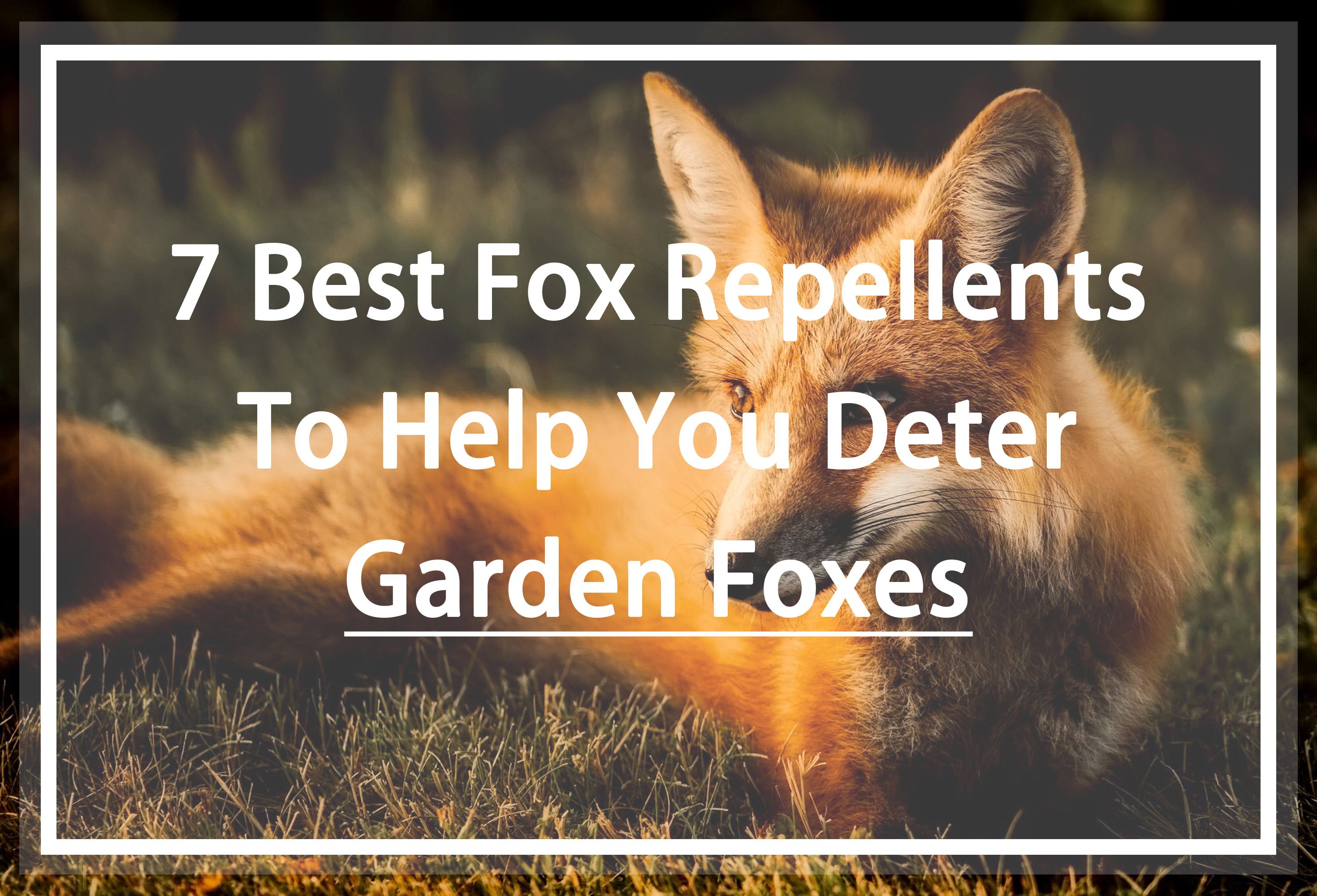 best fox repellents