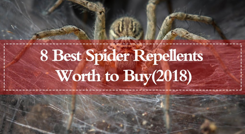 Best Spider Repellents