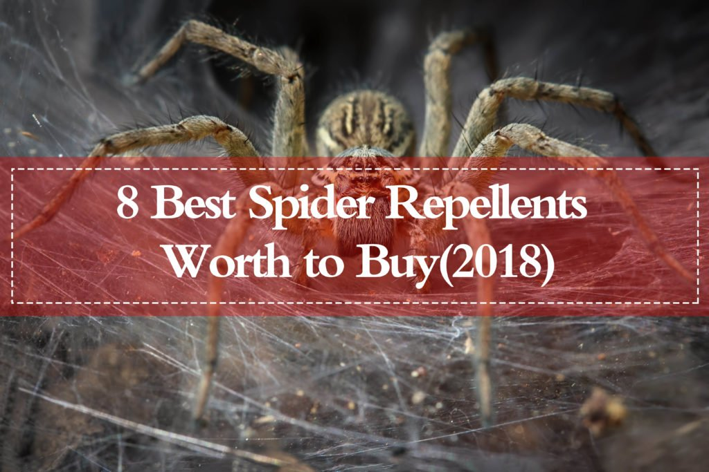 Top 8 Best Spider Repellents (2019 Review) - Pest Wiki