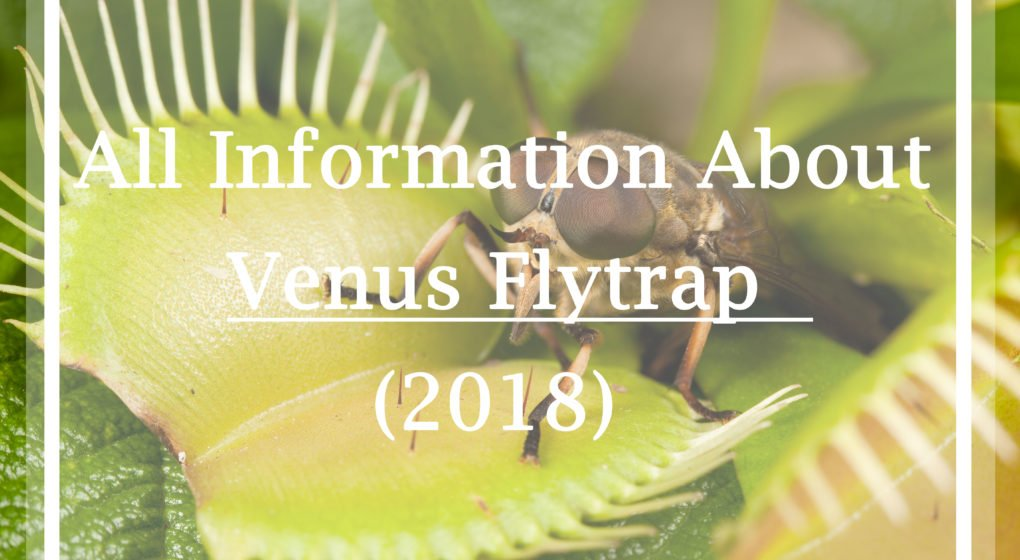 Information About Venus Flytrap