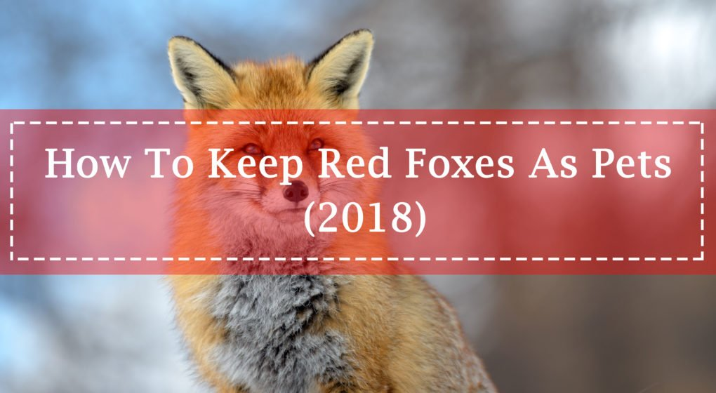 Keep Red Foxes