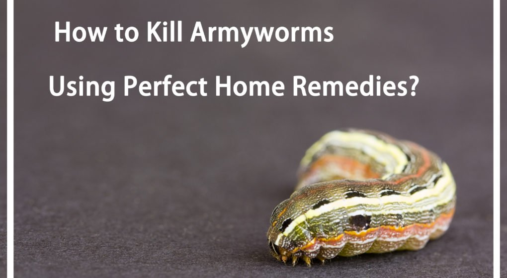 Kill Armyworms