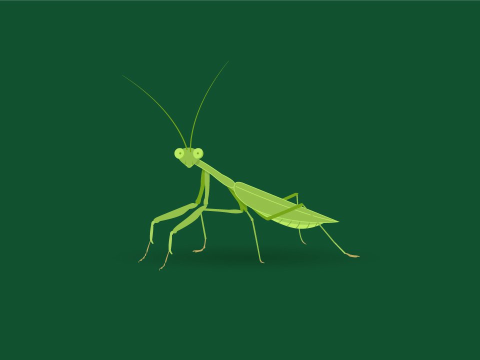 Mantis Species