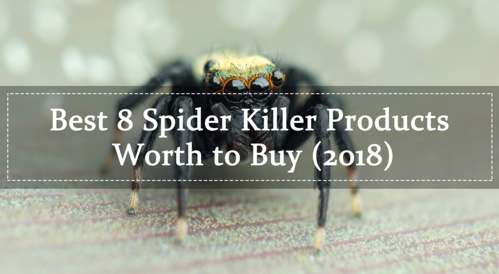 Spider Killer Products