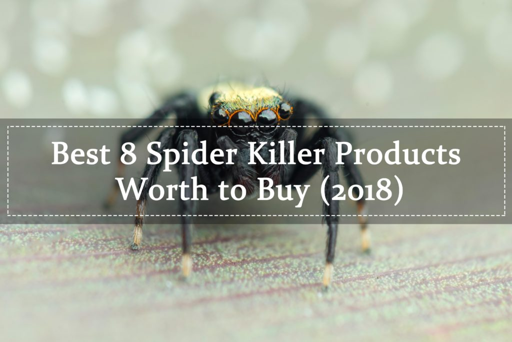 Top 8 Best Spider Killer (2019 Buying Guide) - Pest Wiki