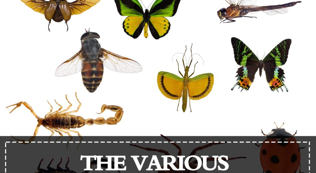 Various Pest Control Insects