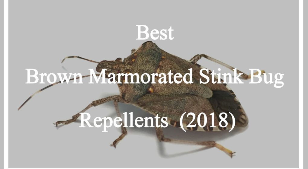 Brown Marmorated Stink Bug Repellents