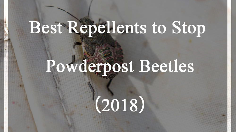 Repellents to Stop Powderpost Beetles