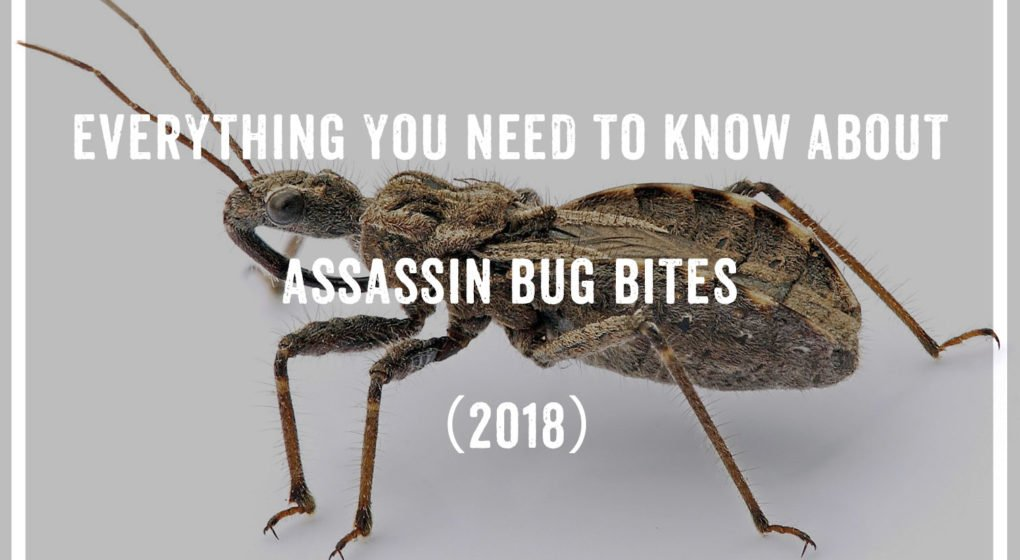 Assassin Bug Bites