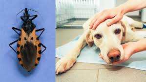 Chagas Disease and Your Pets