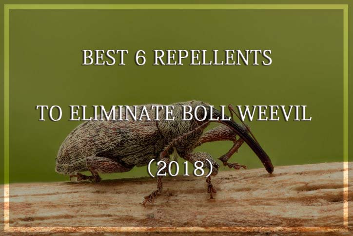 Eliminate Boll Weevil
