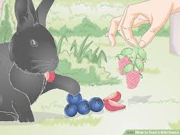 Feed a Wild Rabbit