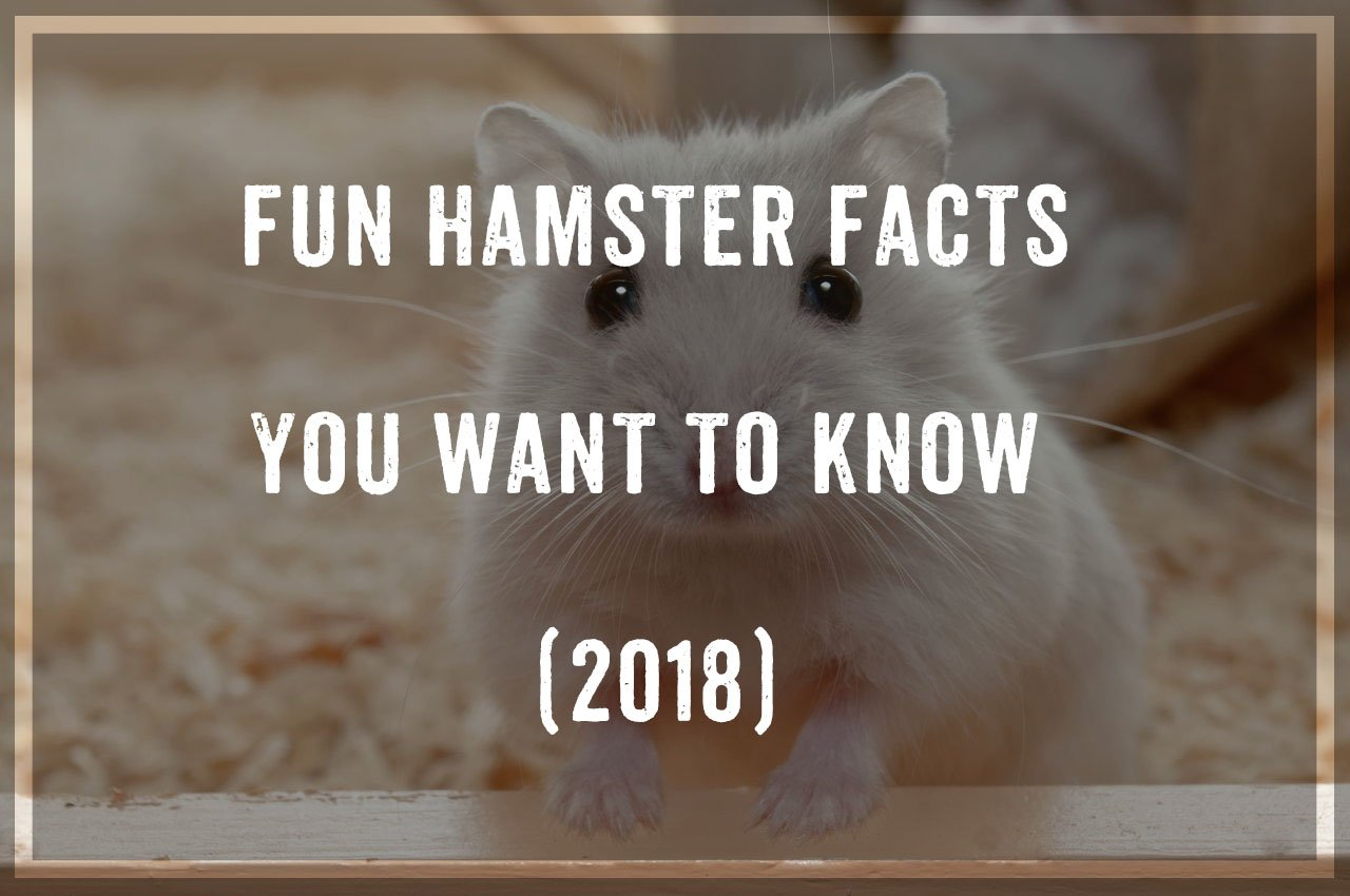 Hamsters Facts