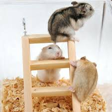 Hamsters and Exercise